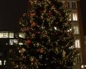 weihnachtsbaum-bremen