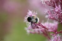 Blümchen und Bienchen