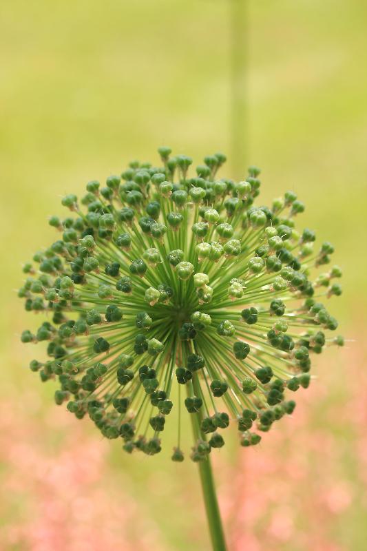 runde Blume ;)