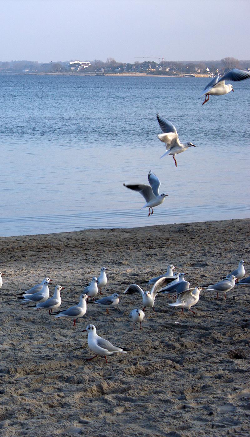 moewen-strand