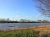 Ruderer auf der Weser