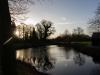 Schwäne auf einem Teich
