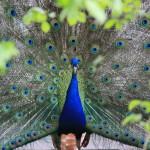 Begegnungen mit der Tierwelt