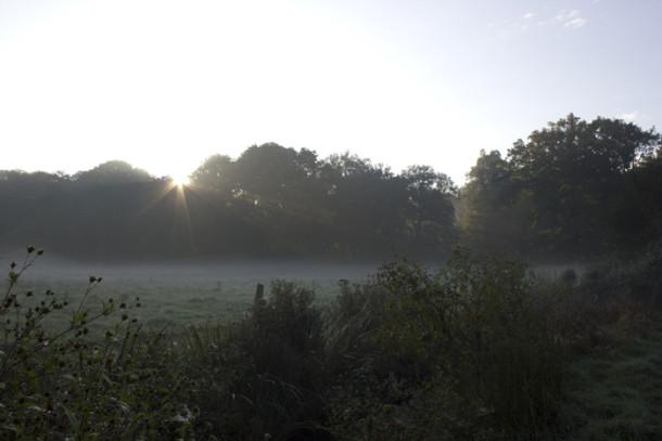 buergerpark-im-nebel