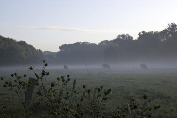 kuehe-nebel