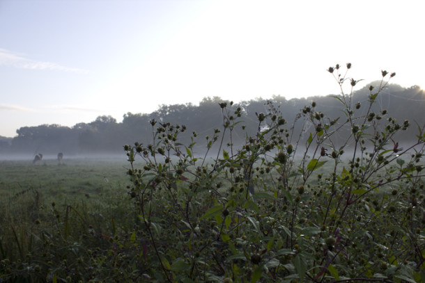 nebel-buergerpark-frueh