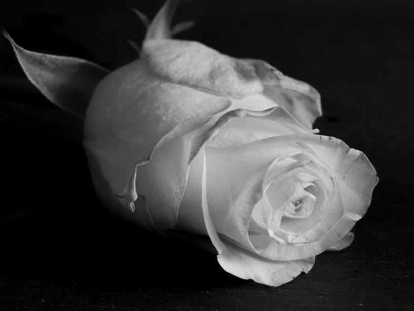rose-sw2
