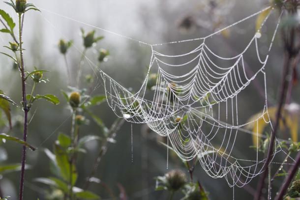 spinnenweben-buergerpark