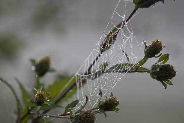 spinnenweben_buergerpark1
