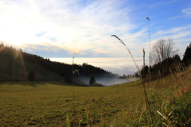 schwarzwald-sonnenschein