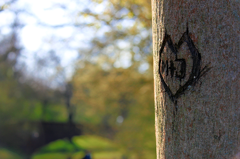 M + J geritzt in Baum