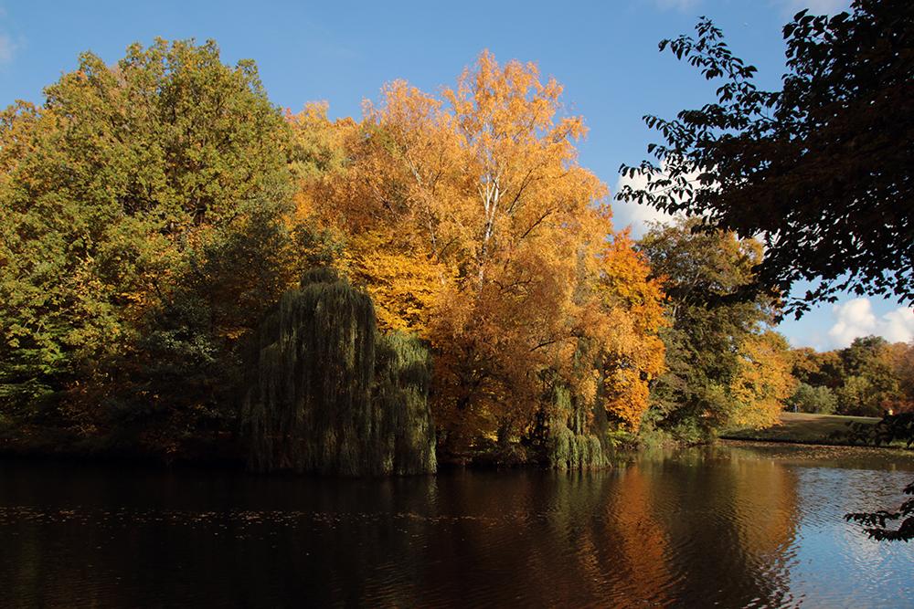 Herbst im Bürgerpark
