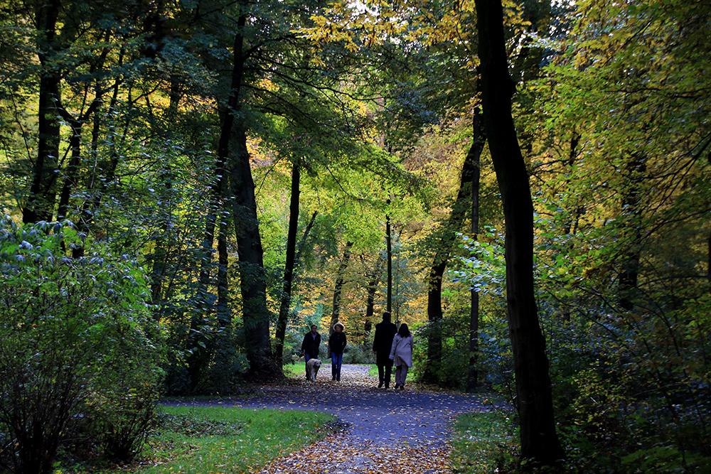 Bürgerpark im Herbst