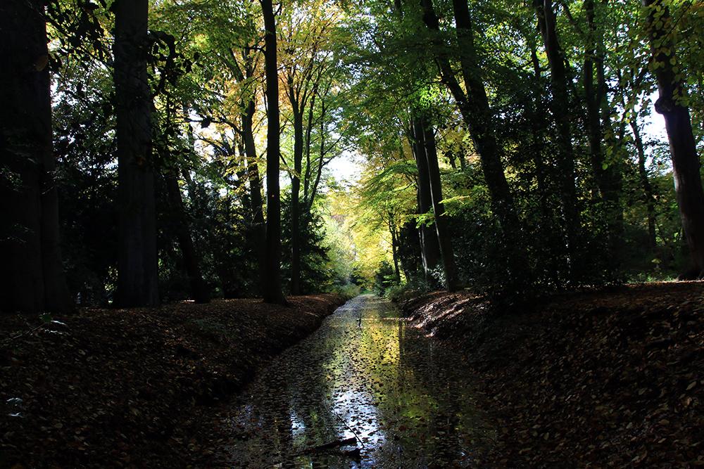 Tümpel Bürgerpark