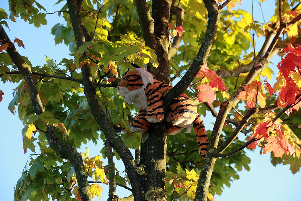 Baum mit einem Tiger