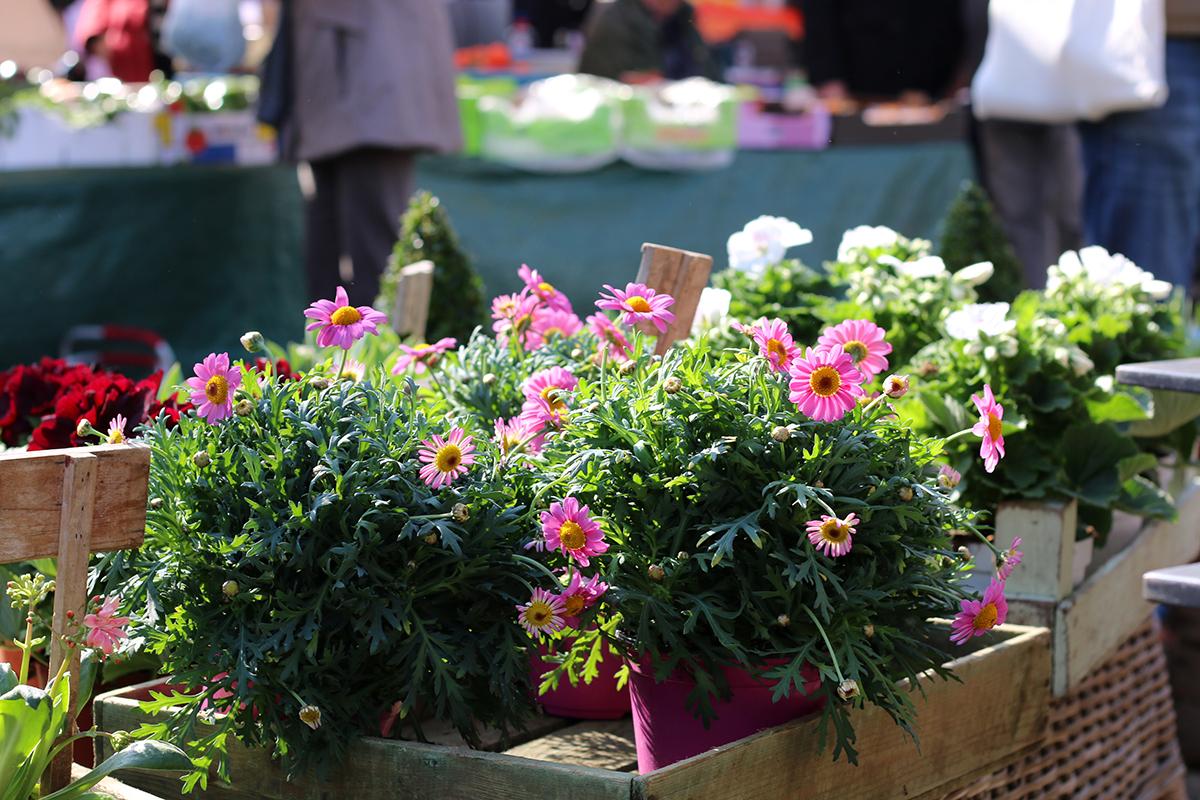 Blumen Findorffmarkt