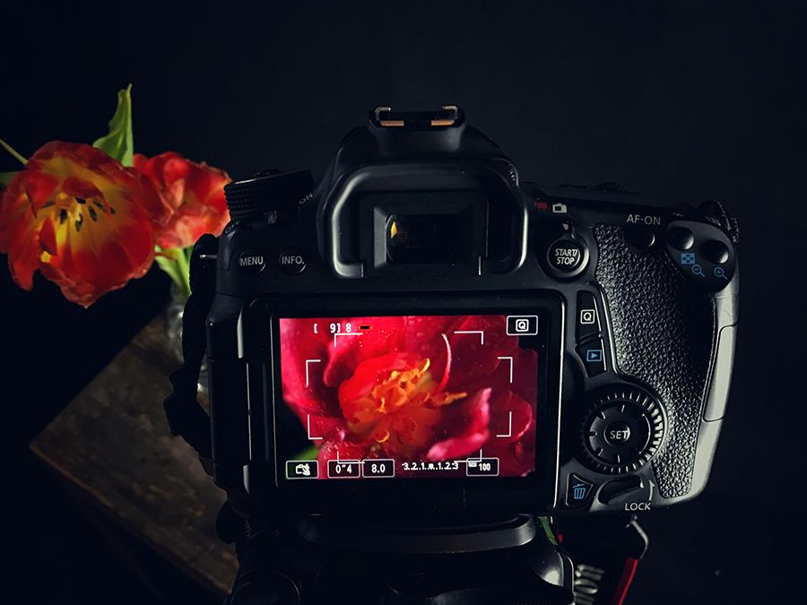 Tulpen Kameraview