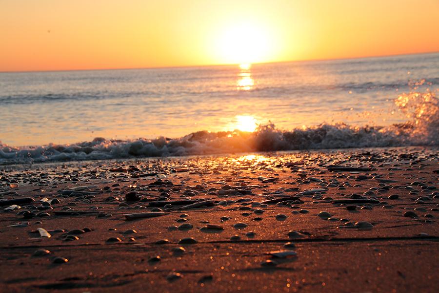 muscheln-sunset