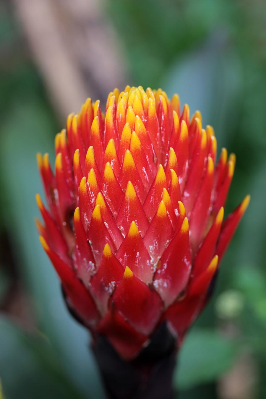 botanika-blume