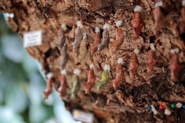 Raupen in der Botanika Bremen