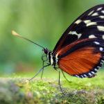 Schmetterlingshaus in der Botanika